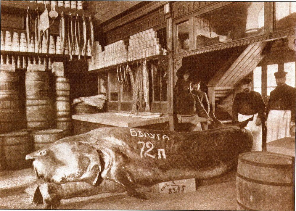 66. Гигантская белуга, пойманная в Каспии и выставленная в магазине В. Ф. Бобкова на Балчуге