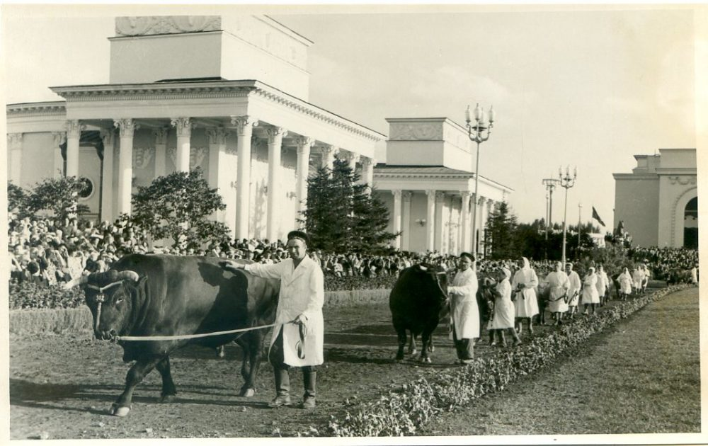 Kureschov, All-Union Agricultural Exhibition, TASS No 243428, 1954