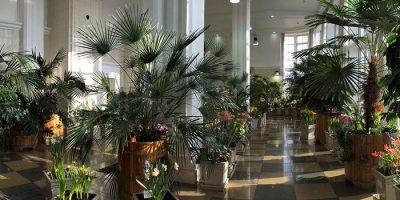 Выставка «Зимний сад императрицы»