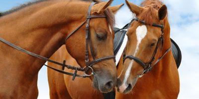 Прогулки на лошадях в конном клубе «Усадьба» в Марфино со скидкой до 74%