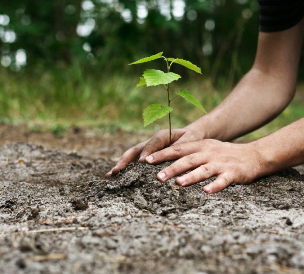 Картинка как сажают дерево 545