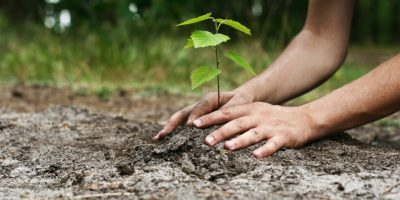 Экологическая акция «Миллион деревьев»