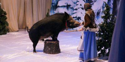 Спектакль «Каприз Королевы» в Театре «Уголок дедушки Дурова»