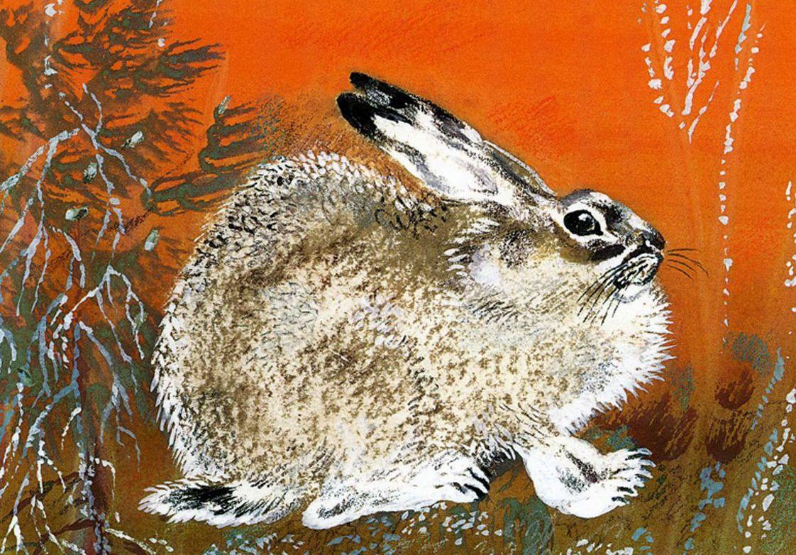 Выставка «Мир животных в детской книге»