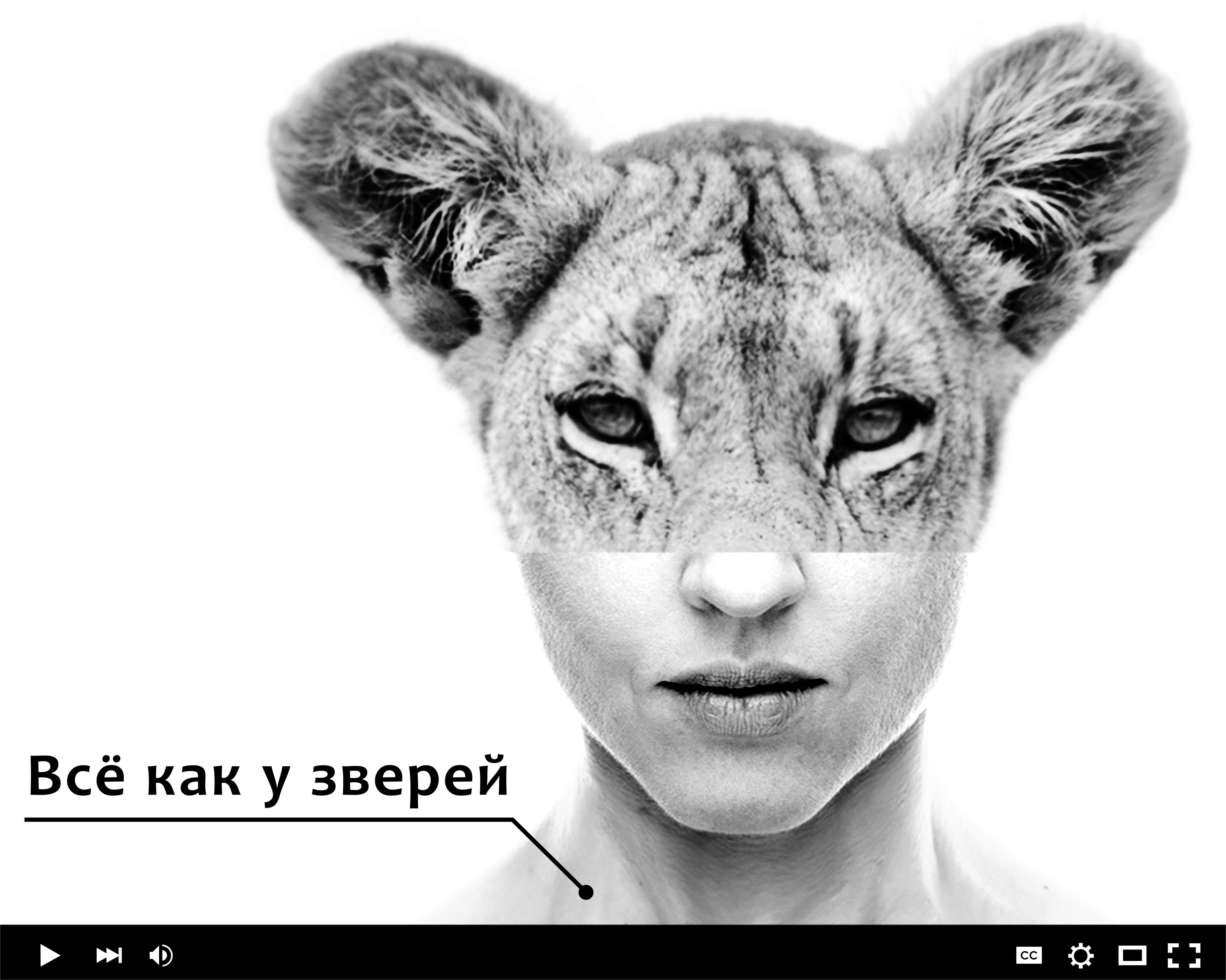 Лекция Евгении Тимоновой Агрессия у людей и других животных