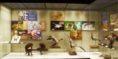 Выставка «Эволюция поведения животных» (постоянная)