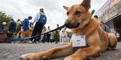Выставка бездомных собак и кошек «Надо брать! Летом»
