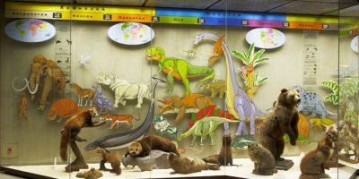 Выставка «Развитие органического мира» (постоянная)