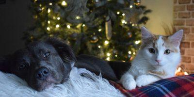 Ёлка-пристройство для собак икошек изприютов «Домой!»