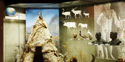 Выставка «Происхождение человека» (постоянная)