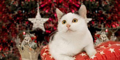 Бесплатная выставка кошек из приюта «Муркоша»