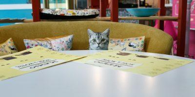 Концерты Piano & Cats